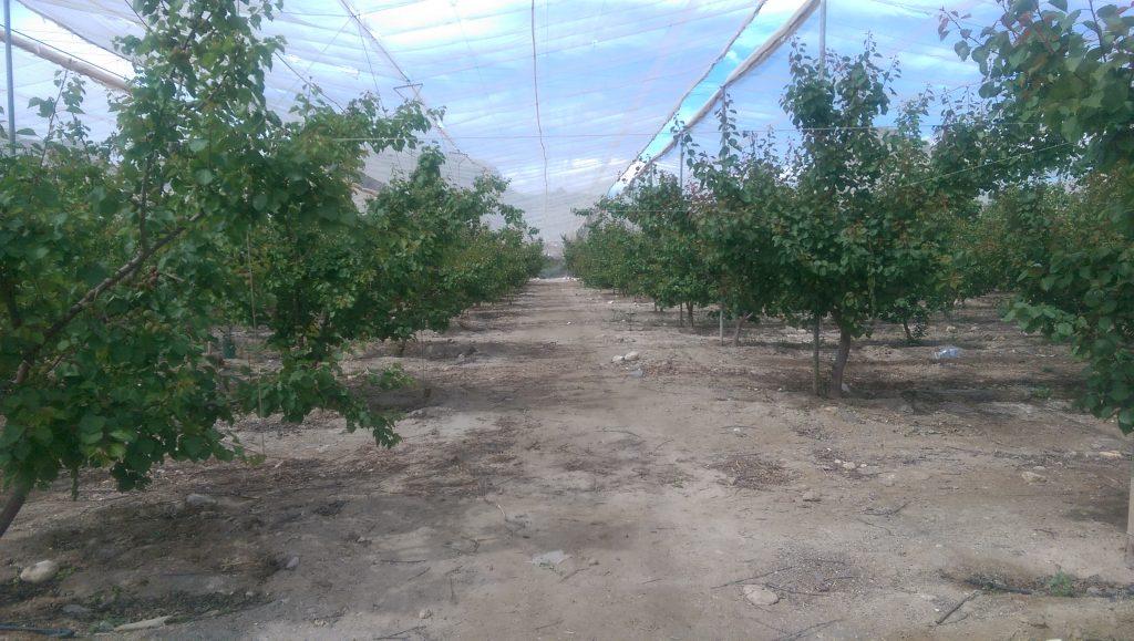 Frutas Durán-Reportaje en Diario del Campo