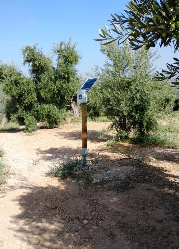Hub/receptor para sondas en olivos