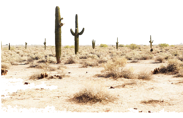 Desert and fertile land-Two increasingly related concepts