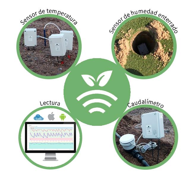 Sensores en green Plantae