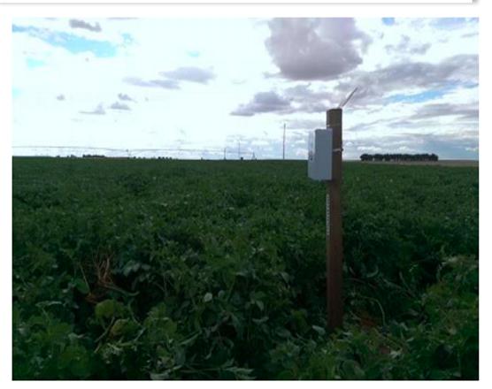 sensores en cultivos herbáceos