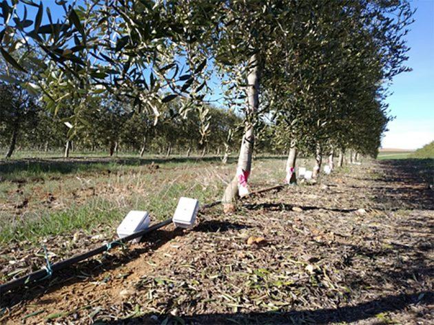 Ingeniería agrícola en olivar