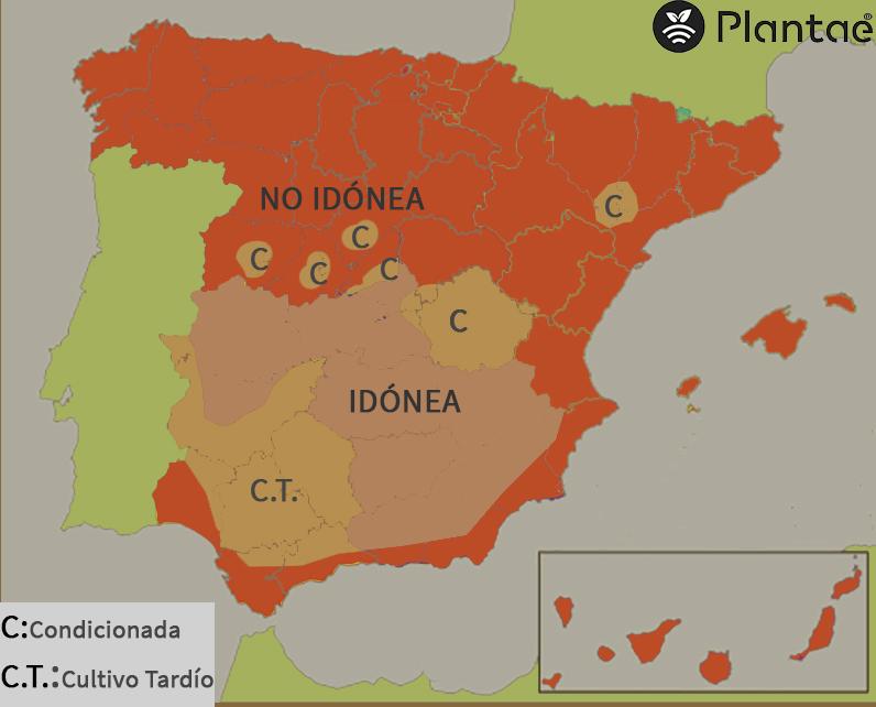 Concentración de pistacho en España