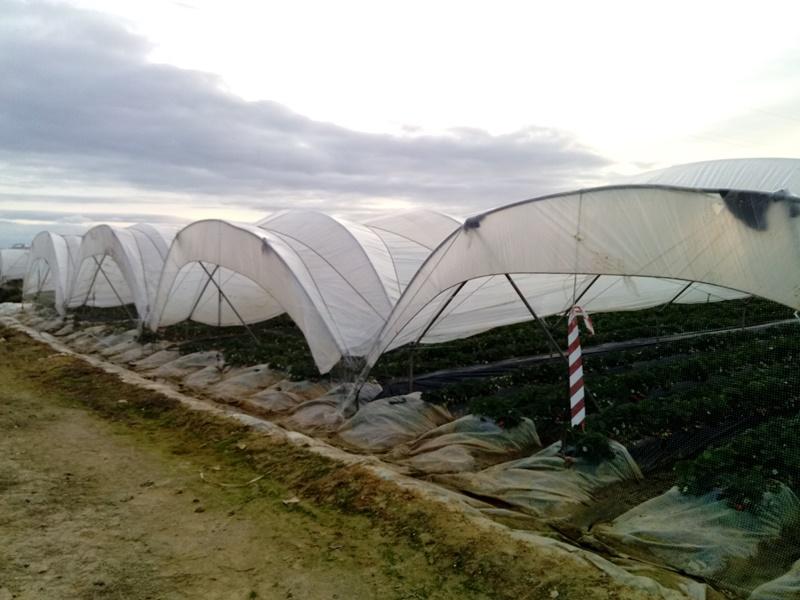 Sensores en invernaderos-Huelva