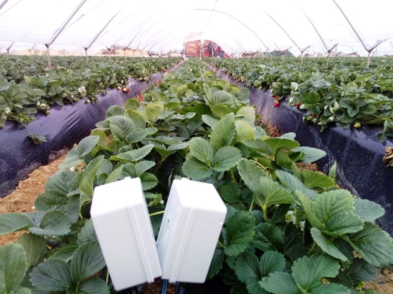 Sensores en invernadero-Huelva