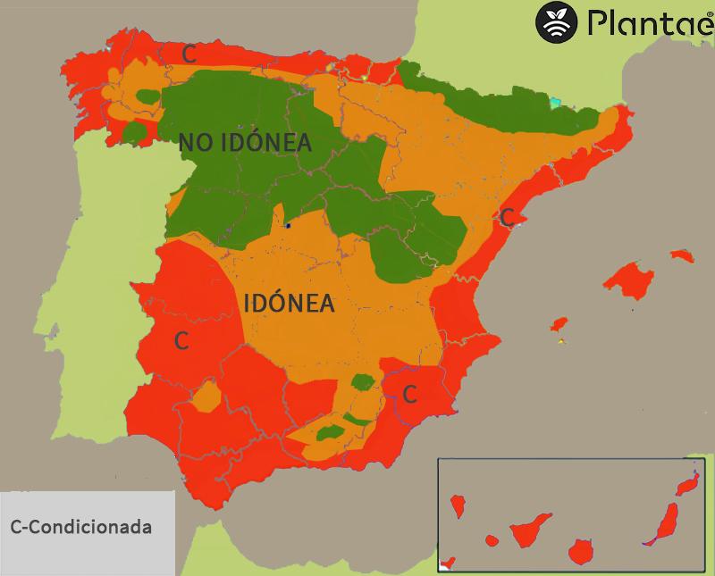 Mapa de pistacho en España según los días de frío