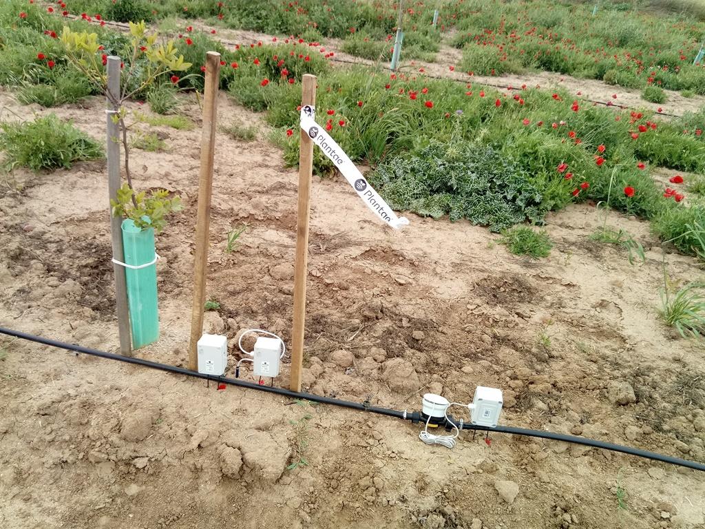 Plantación de pistacho con sensores de humedad y caudalímetro