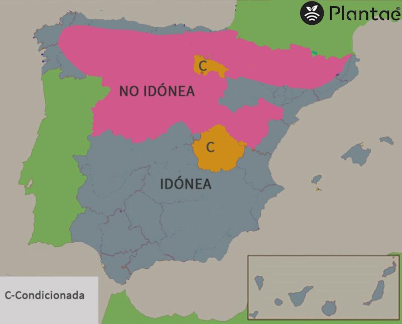 mapa de pistacho en España  según la humedad relativa