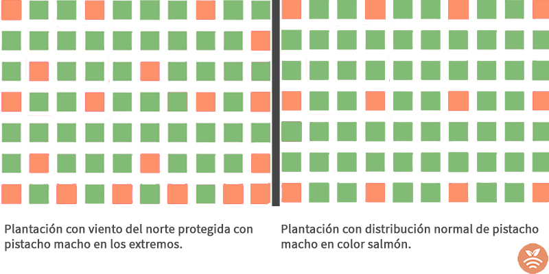 Modelo de plantación de pistachos