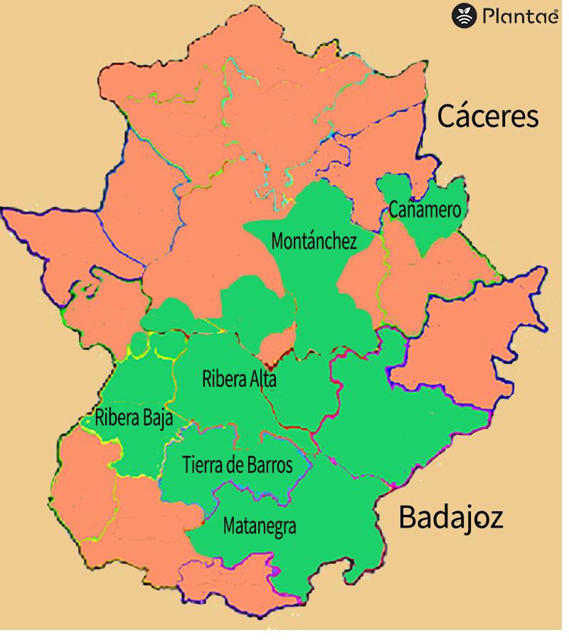 Zonas de viñedos en Extremadura