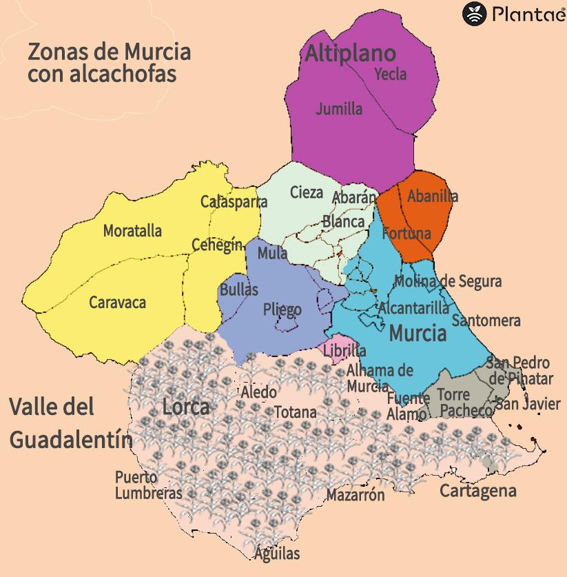 Mapa de al alcachofa en Murcia
