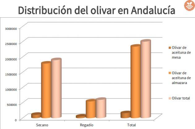 Distribución del olivar en Andalucía