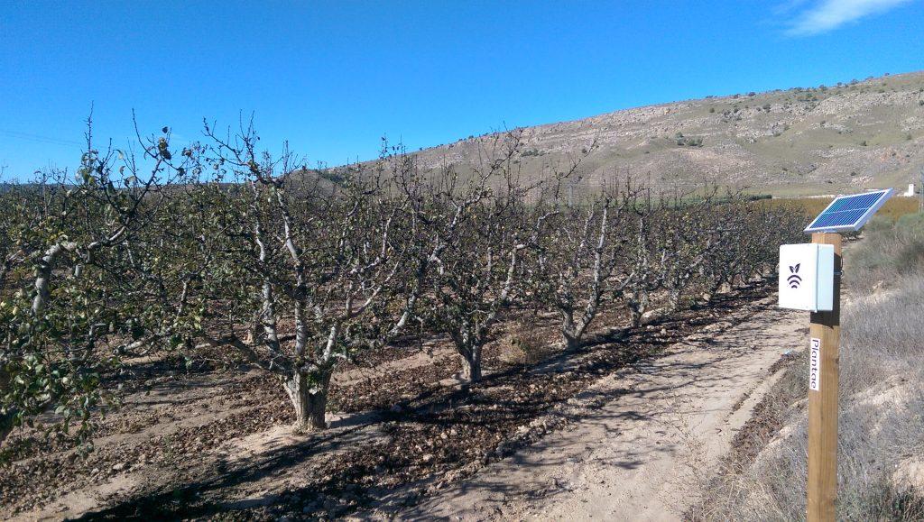 Plantación intensiva de peras de Jumilla con riego controlado por Plantae