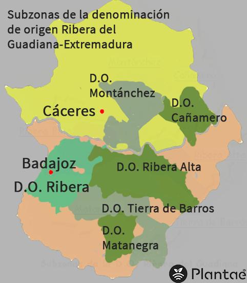 Vinos en Extremadura