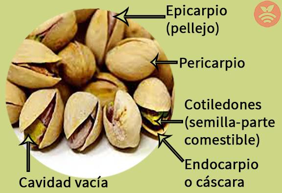 Partes del pistacho