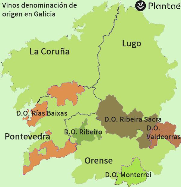Vinos con denominación de origen en Galicia