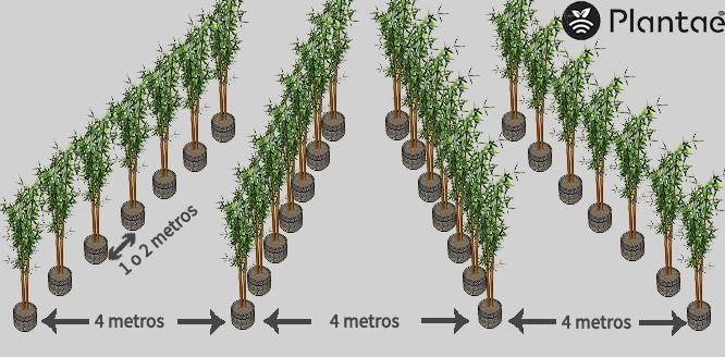 Distribución del olivar intensivo