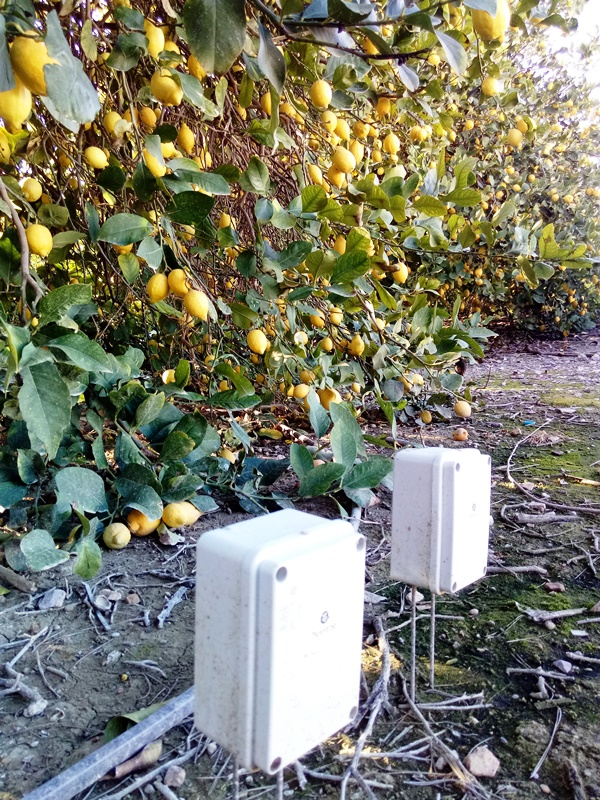 Sensores en limones