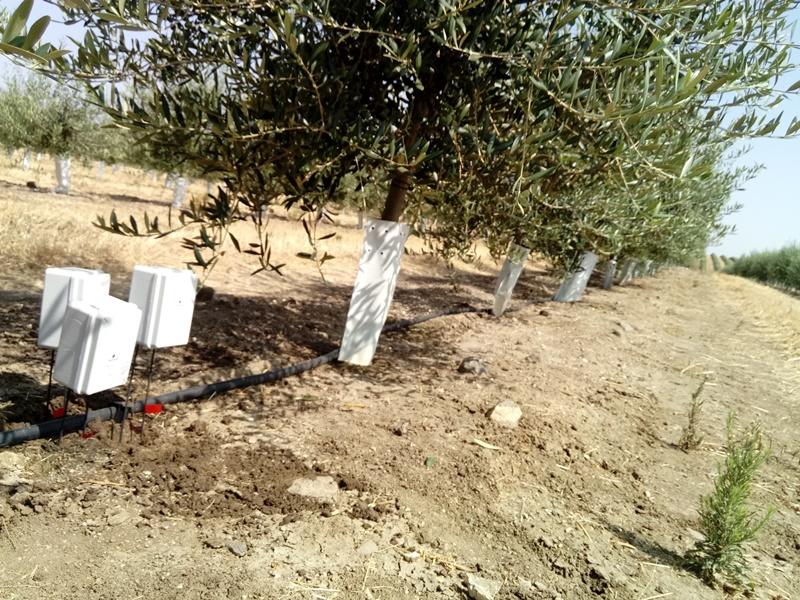 Sensores a tres profundidades en olivar