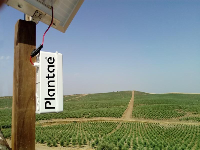 Plantación de olivo superintensivo en Alentejo-Portugal controlado por sensores Plantae