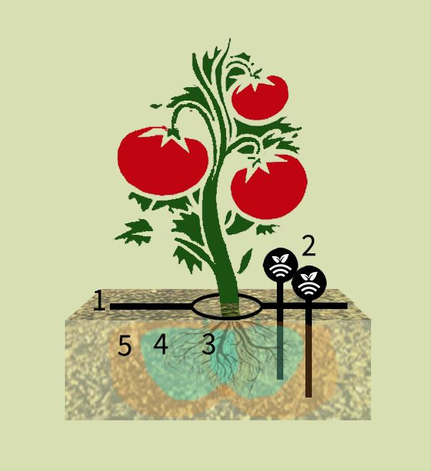 Tomates con riego por goteo controlado por sondas