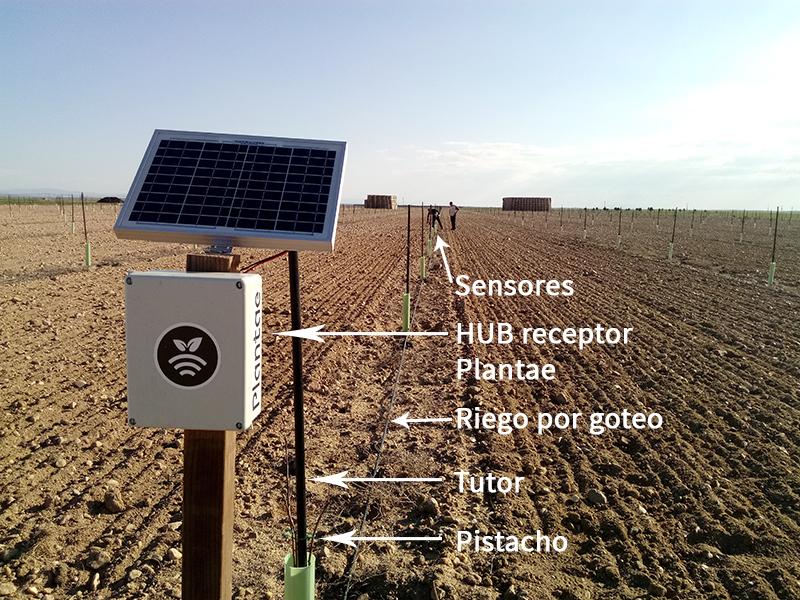 Sensores/sonda agrícolas para pistacho