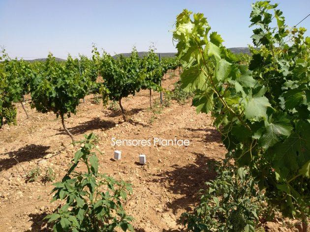 Viñedos controlados por sensores - Riego de viñedos