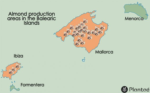 Los almendros en las Islas Baleares