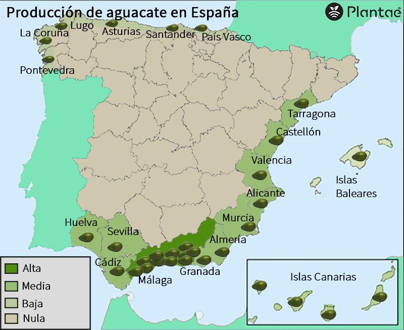 Mapa de aguacate en España actualizado en 2021