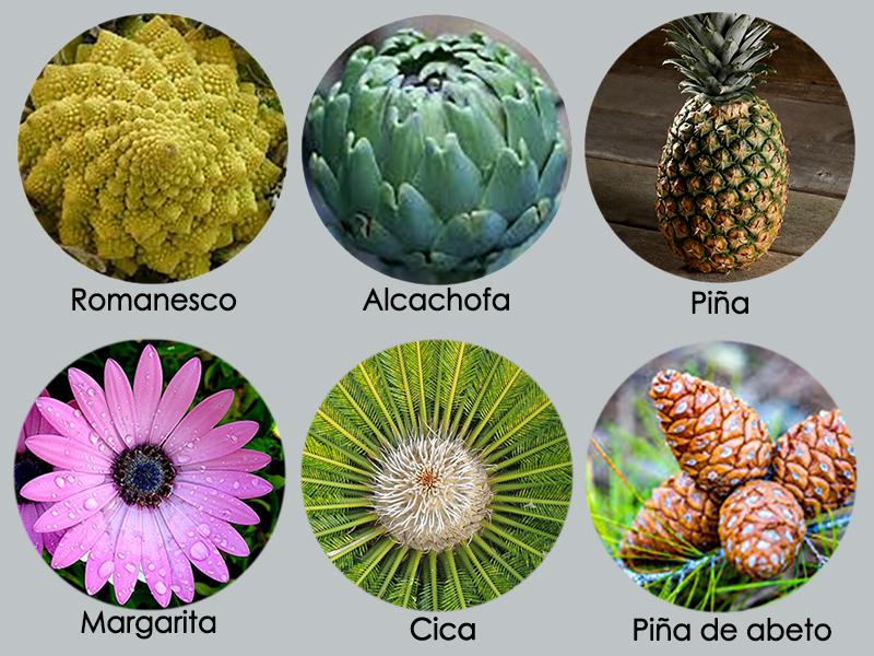 Fibonacci  y número áureo en las plantas