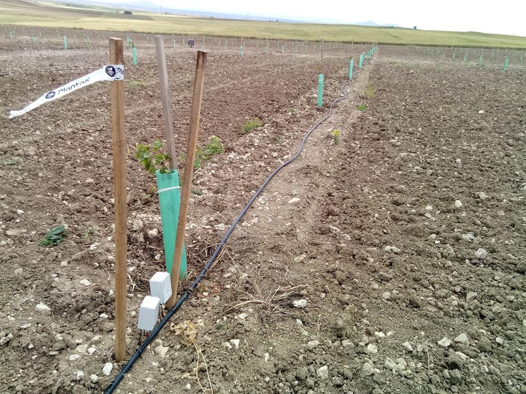 Plantación de pistachos con control de salinidad