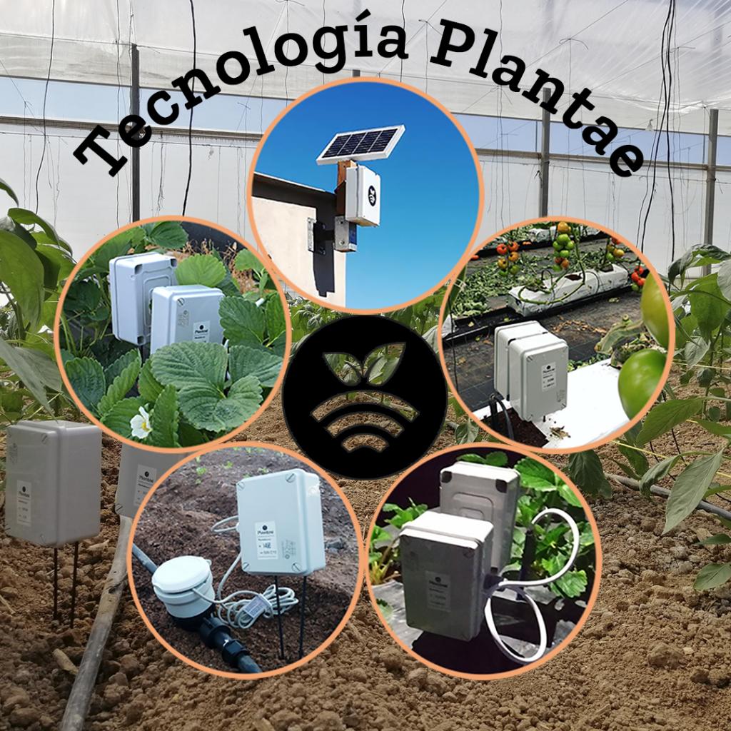 Sensores/sonda Plantae