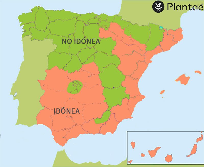 Mapa de calor para almendro intensivo