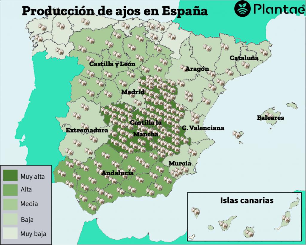 mapa de producción de ajo en España