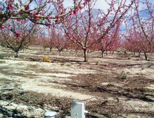 Caudalímetro en frutal