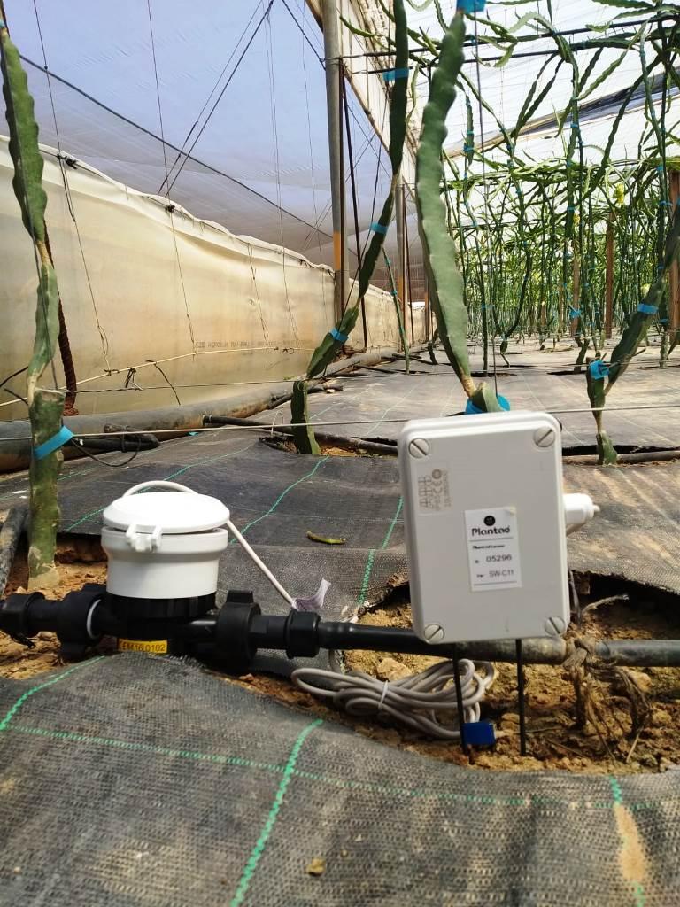 Caudalímetro en plantación intensiva