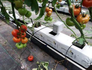 sonda-sensor-hidropónico-tomate