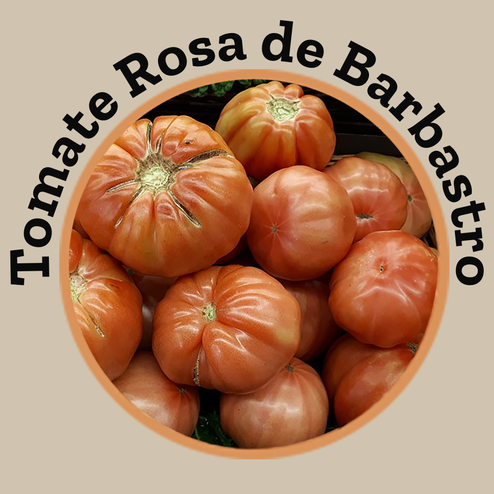 The water balance of the soil in the pink tomato of Barbastro