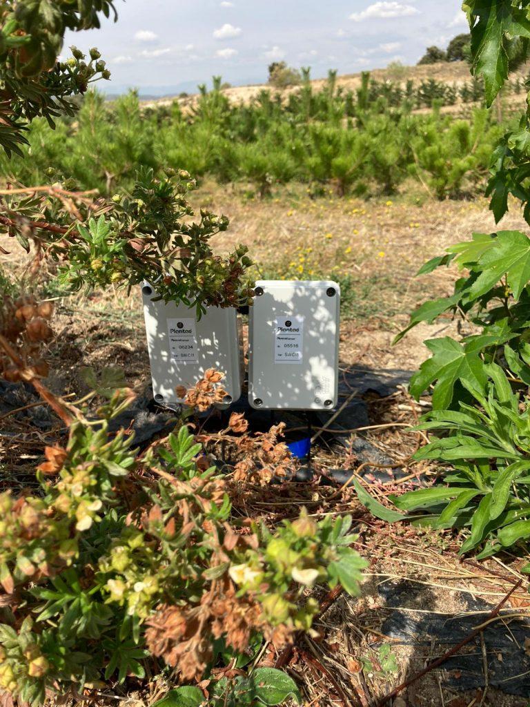 Riego controlado con sensores/sonda en el bonsái