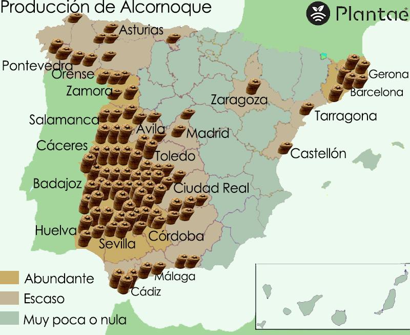 Alcornoque en España