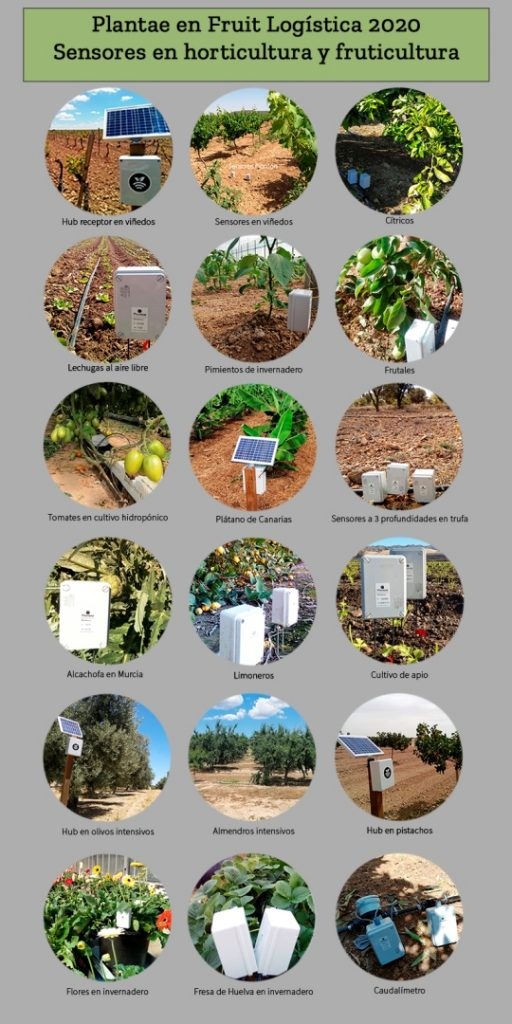 Proof of this is the following image with sensors in fresh fruits and vegetables from Spain, Portugal and Algeria.
