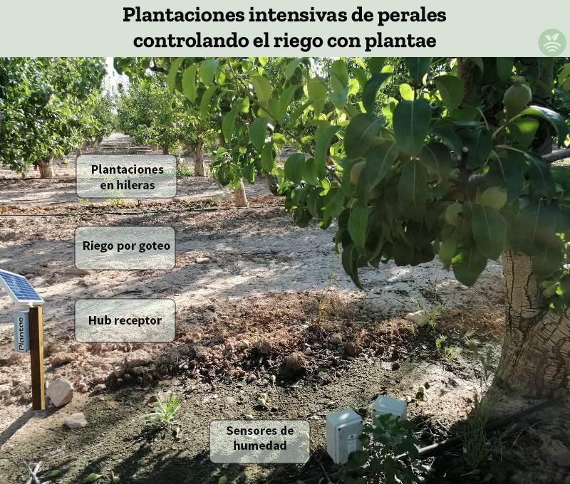 Riego controlado de peras de Lleida