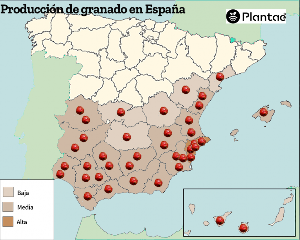 The pomegranate in Spain