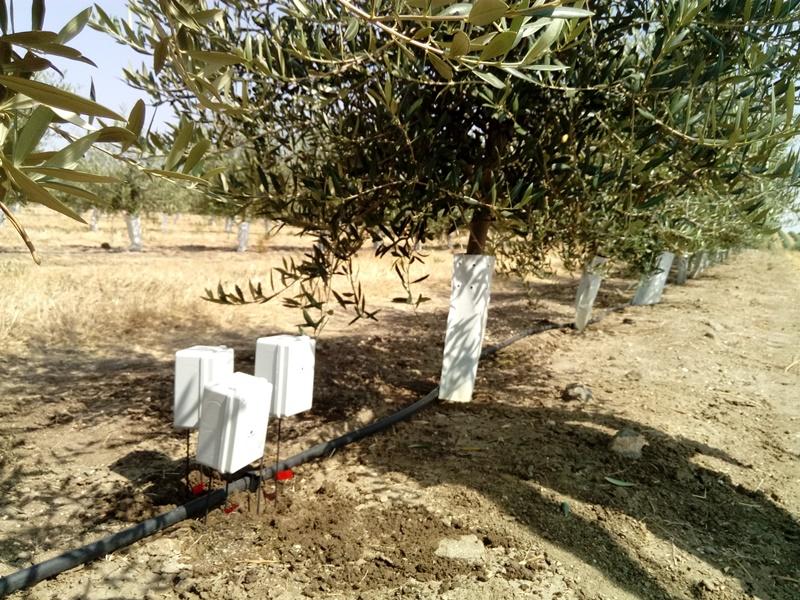Sensores/sonda en olivos