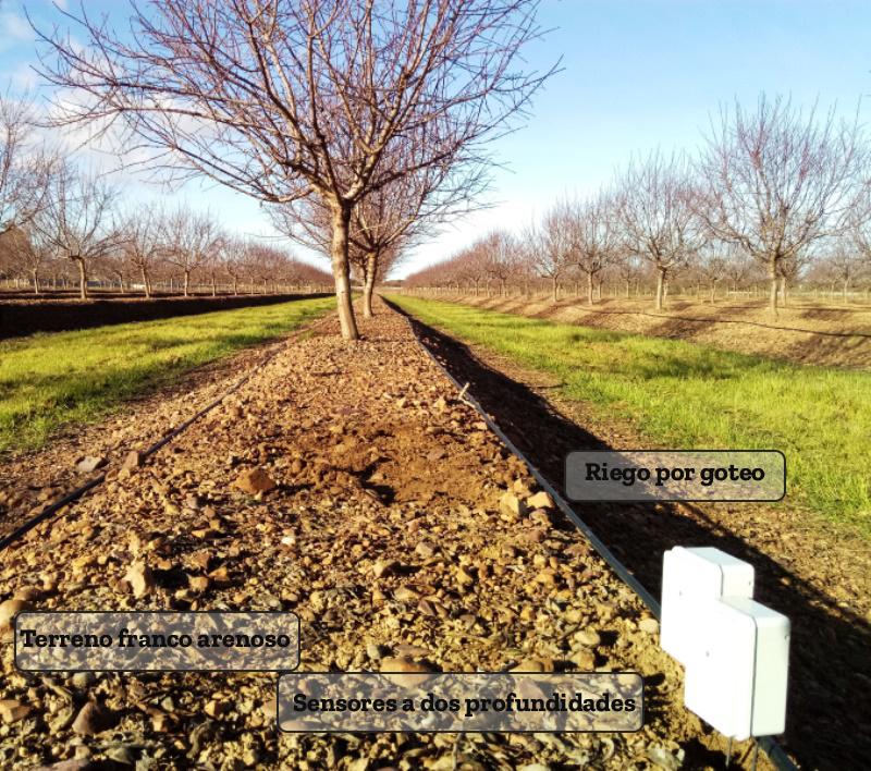 Sensores de humedad en almendros intensivos de Badajoz