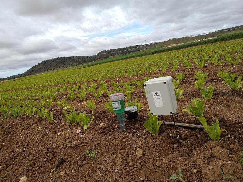 Sonda de humedad en plantación de lechuga con goteo enterrado