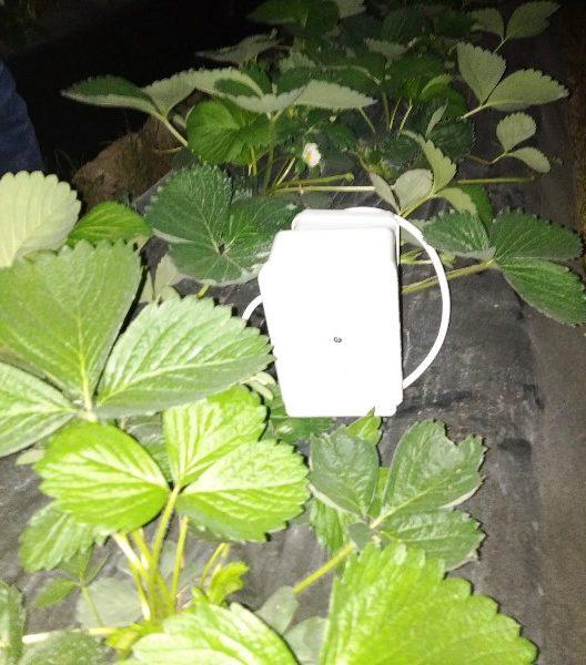 Bur temperature probe (sensor)