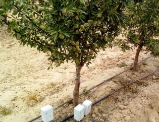 Agricultural irrigation water-Parameters to take into account-Accumulation of salts- (II)