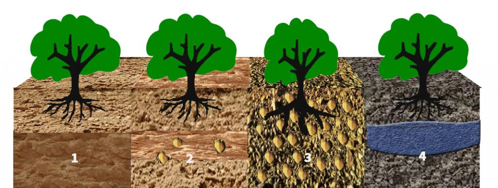 Sistema radicular- Control con sondas y sensores en cultivos