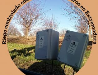 Riego controlado con sensores en almendros en Extremadura